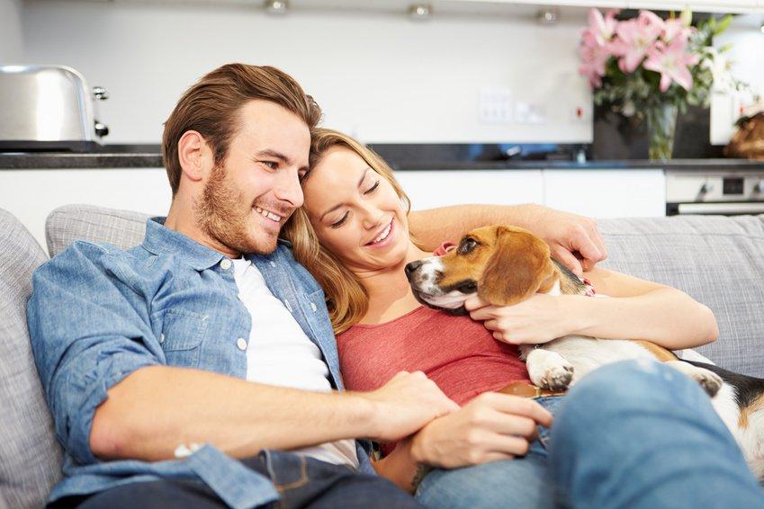 Czy warto pozwalać na zwierzęta w mieszkaniu na wynajem?